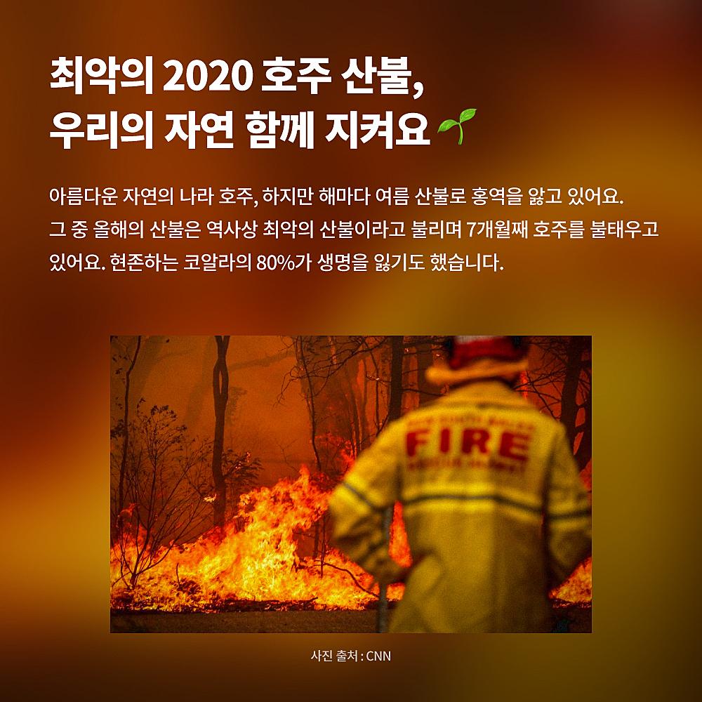 [비정상 블레어] 블레어와 함께하는 호주 산불기부 여전히 불타고 있는 호주에 생명을, 야생동물들에게 따뜻한 손길을.